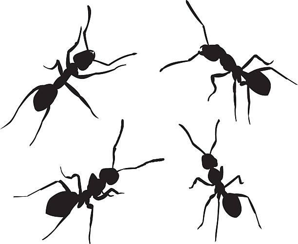 ants silhouettes vector art illustration