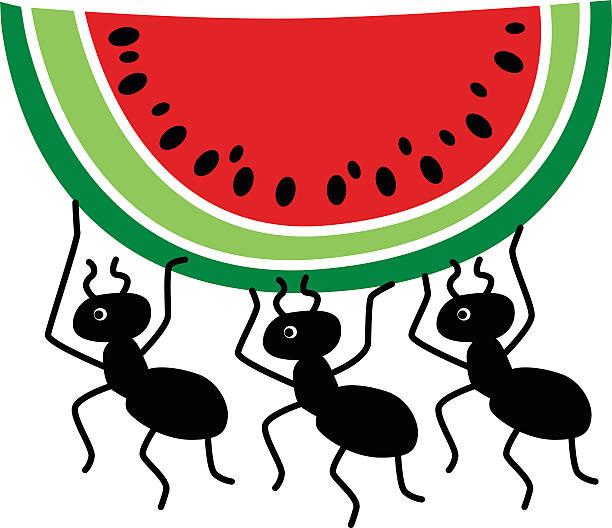 ants stealing watermelon slice vector art illustration