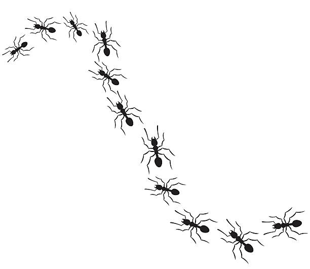 ants traveling in a row vector art illustration