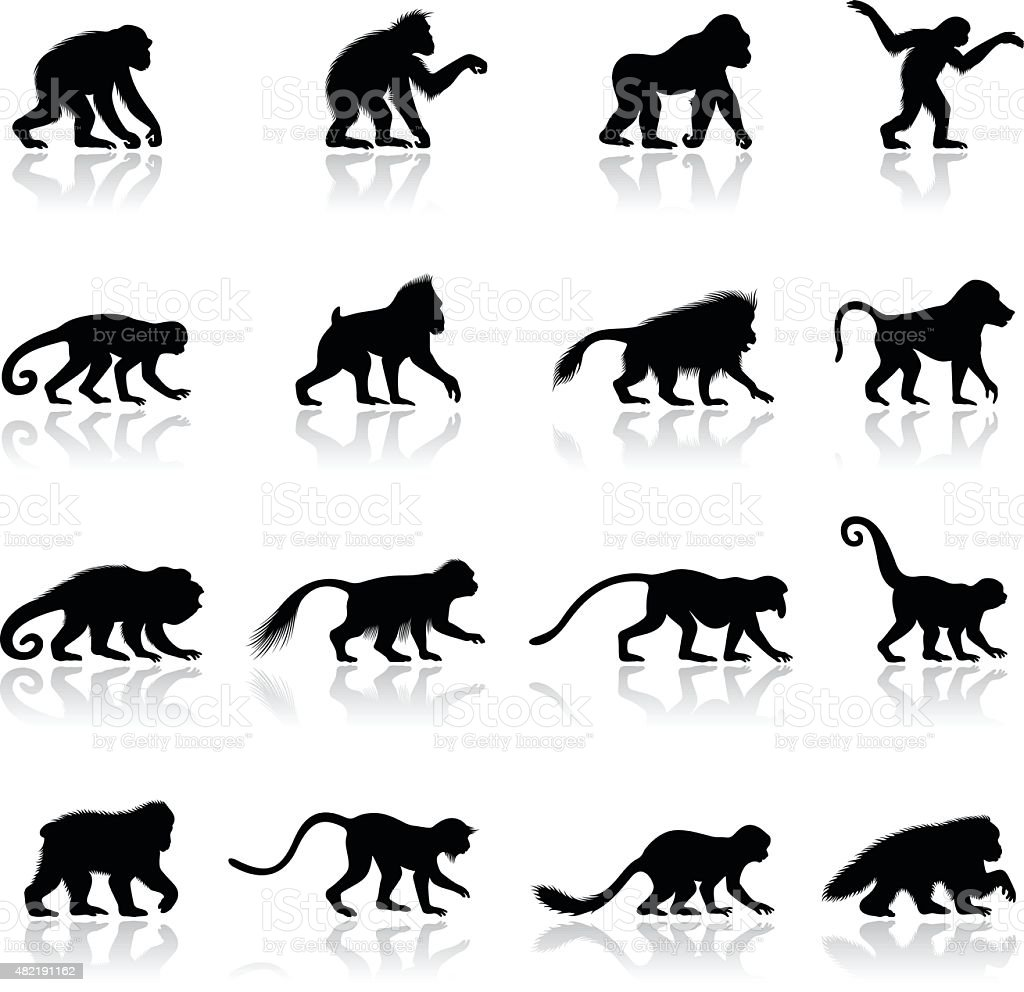 Menschenaffe und Affe Silhouetten – Vektorgrafik