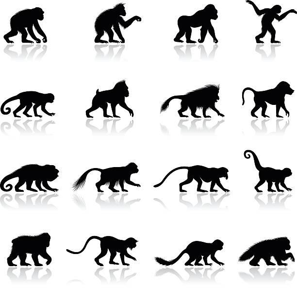 ape and monkey silhouettes - monkey stock illustrations