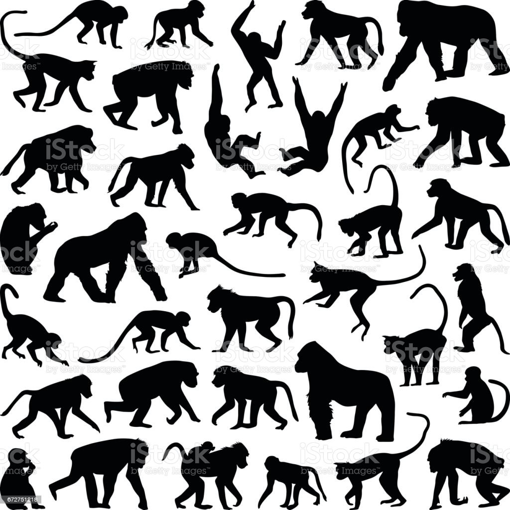 Ape and Monkey Ape and Monkey collection - vector silhouette Animal stock vector