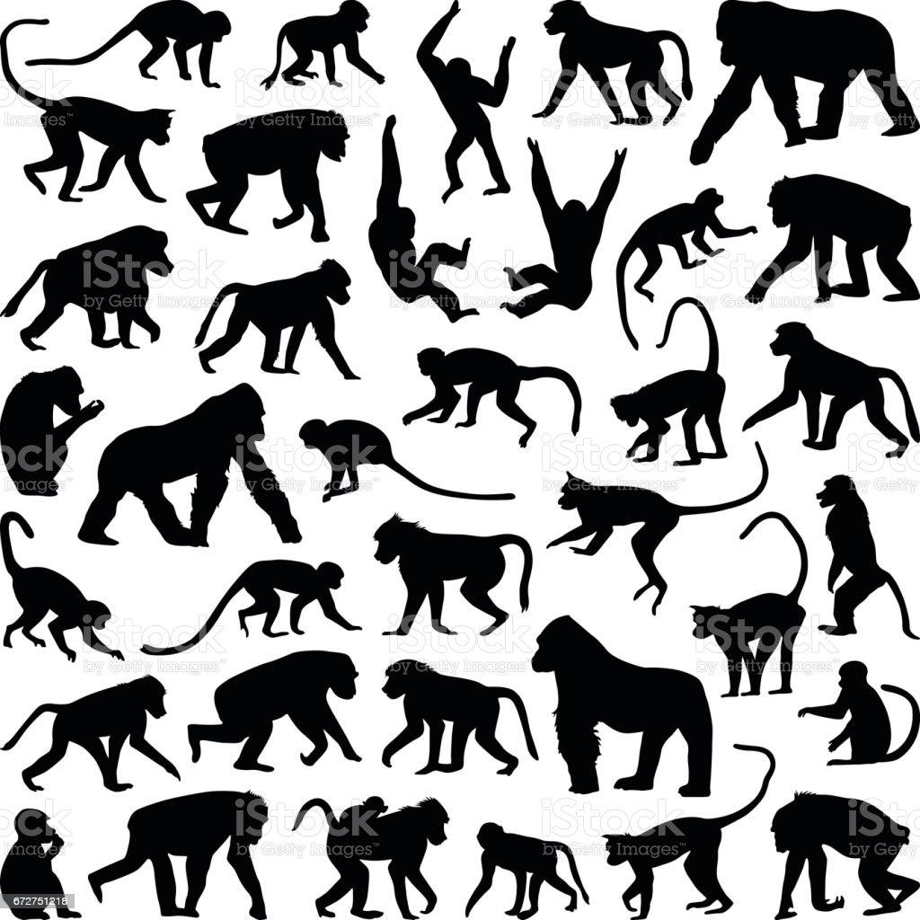 Mono y mono - ilustración de arte vectorial
