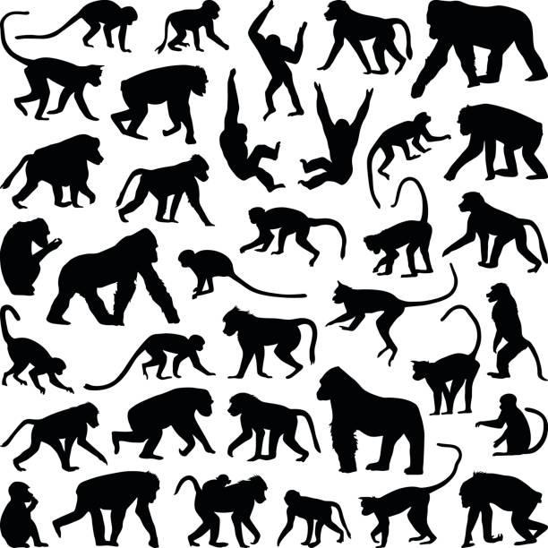 ilustraciones, imágenes clip art, dibujos animados e iconos de stock de mono y mono - gorila
