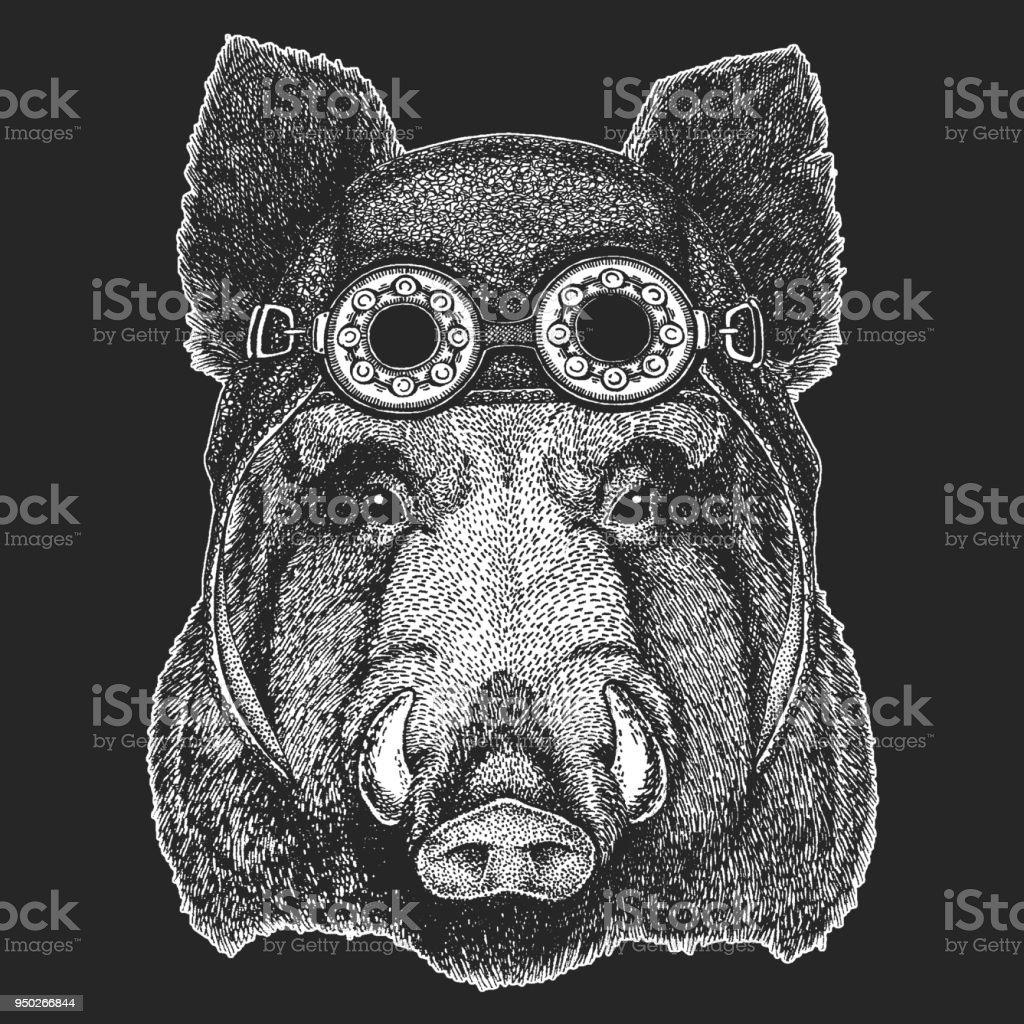 Aper, boar, hog Cool animal wearing aviator, motorcycle, biker helmet. Hand drawn image for t-shirt, tattoo emblem badge logo patch vector art illustration