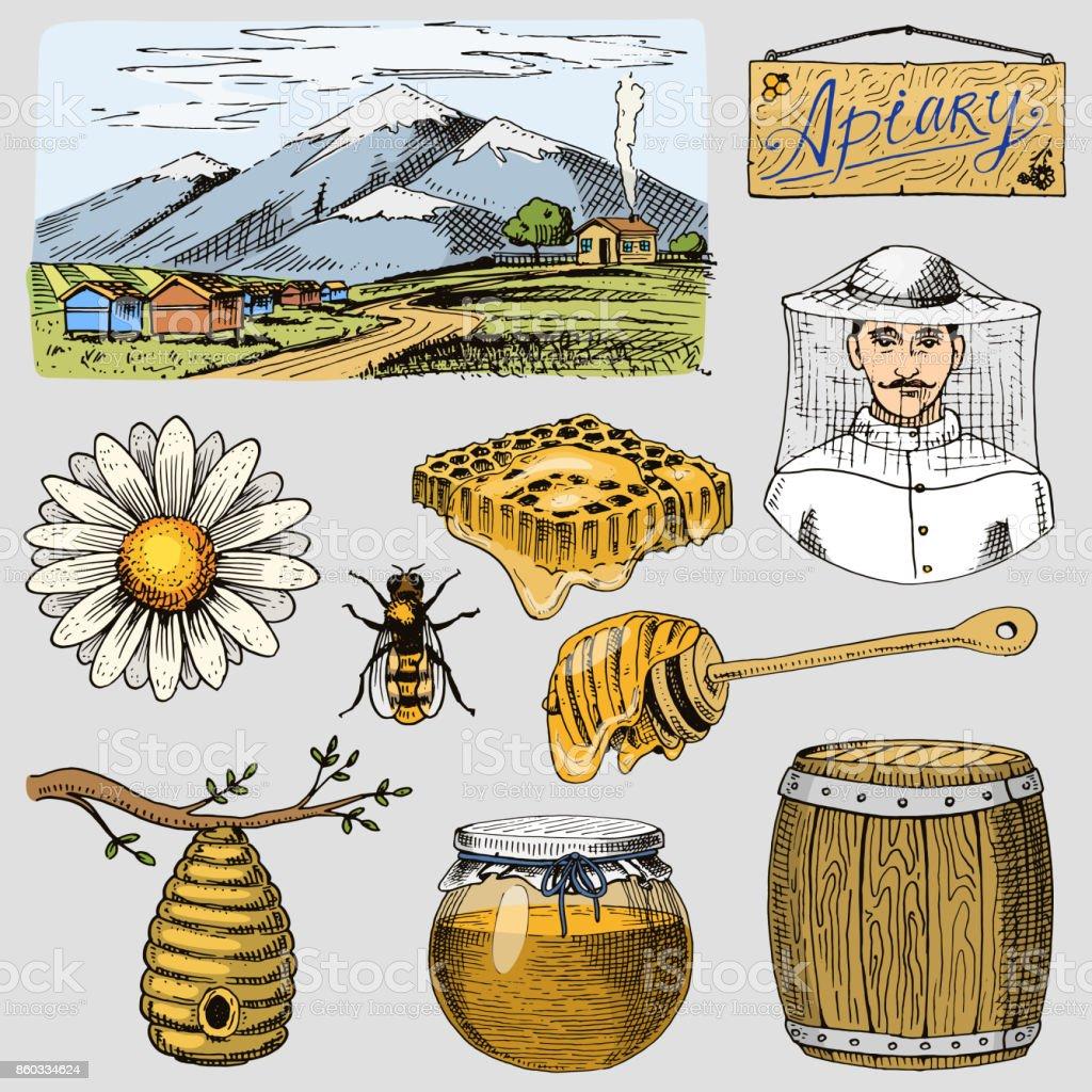 Rucher ferme main dessinée vintage miel en illustration vectorielle de farmeer apiculteur. Montagne et nature produit par bee - Illustration vectorielle