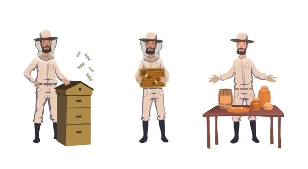 Apiculture and beekeeping. Beekeeper, hiver harvesting honey, dealing with bee-house, selling home-made honey. Set of characters. Colorful flat vector illustration. Isolated on white background Apiculture and beekeeping. Beekeeper, hiver harvesting honey, dealing with bee-house, selling home-made honey. Set of characters. Colorful flat vector illustration. Isolated on white background. beekeeper stock illustrations