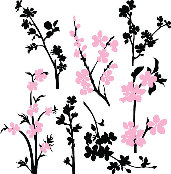 Apple blossom branches Branches silhouettes with flowers.  apple blossom stock illustrations