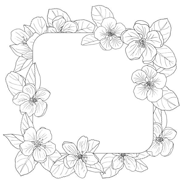 Apple blossom frame, coloring page Beautiful apple blossom frame, coloring page for adults and children apple blossom stock illustrations