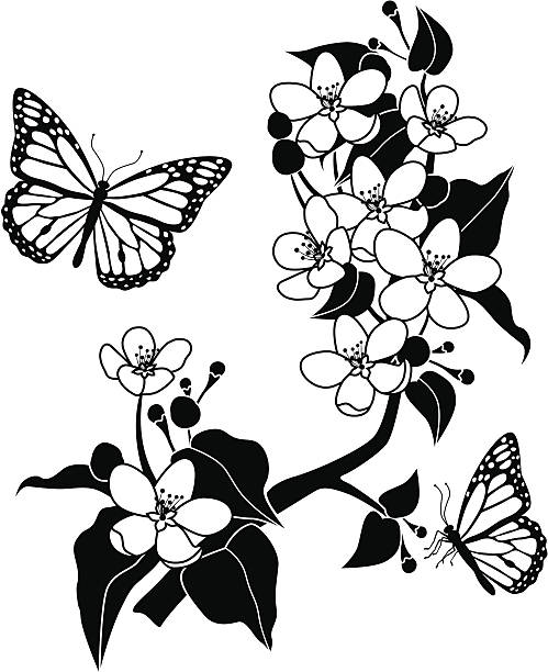 apple blossoms and monarch butterflies A vector illustration of apple blossoms and monarch butterflies. apple blossom stock illustrations