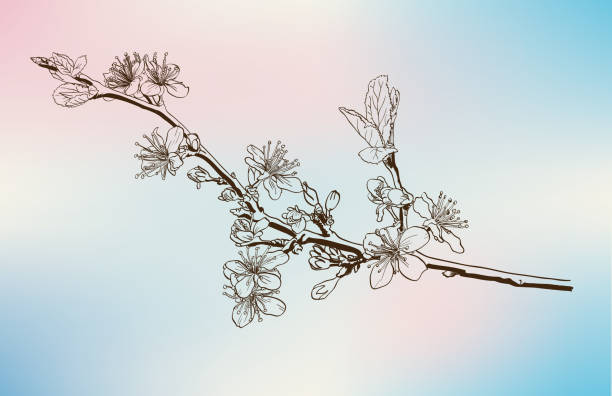 apple blossoms vector sketch codling branches made by hand apple blossom stock illustrations
