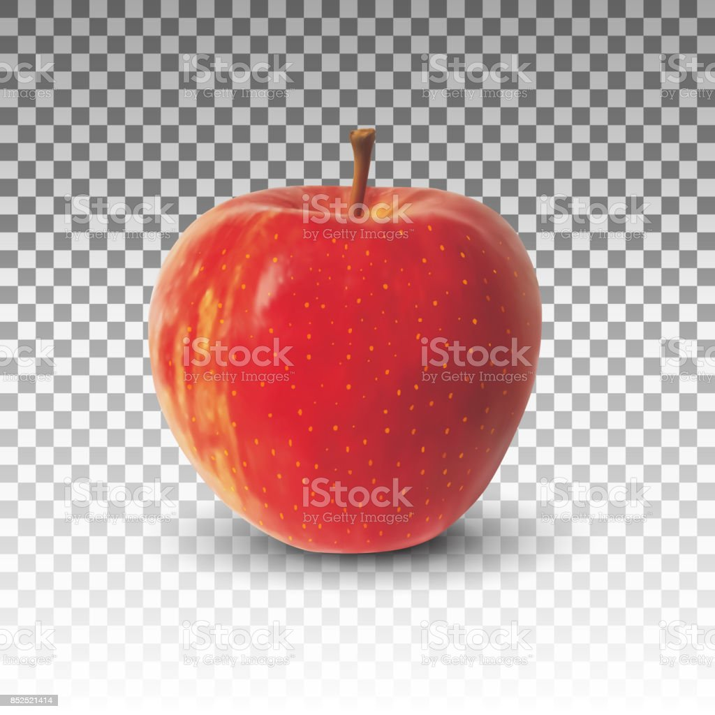 Apple fruit realistic vector isolated vector art illustration