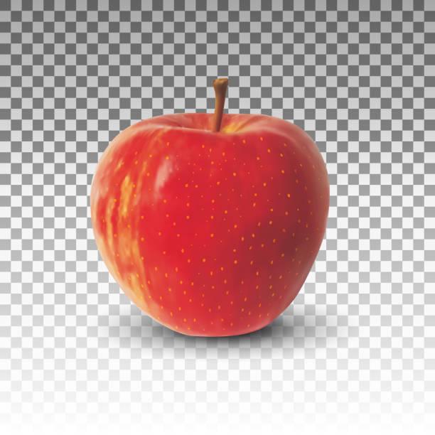 Vectores realistas de manzana fruta aislada - ilustración de arte vectorial