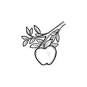 Vector hand drawn apple on branch outline doodle icon. Apple sketch illustration for print, web, mobile and infographics isolated on white background.