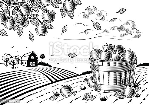 Retro landscape with apple harvest in woodcut style. Fully editable black and white vector illustration with clipping mask. Includes high resolution JPG.