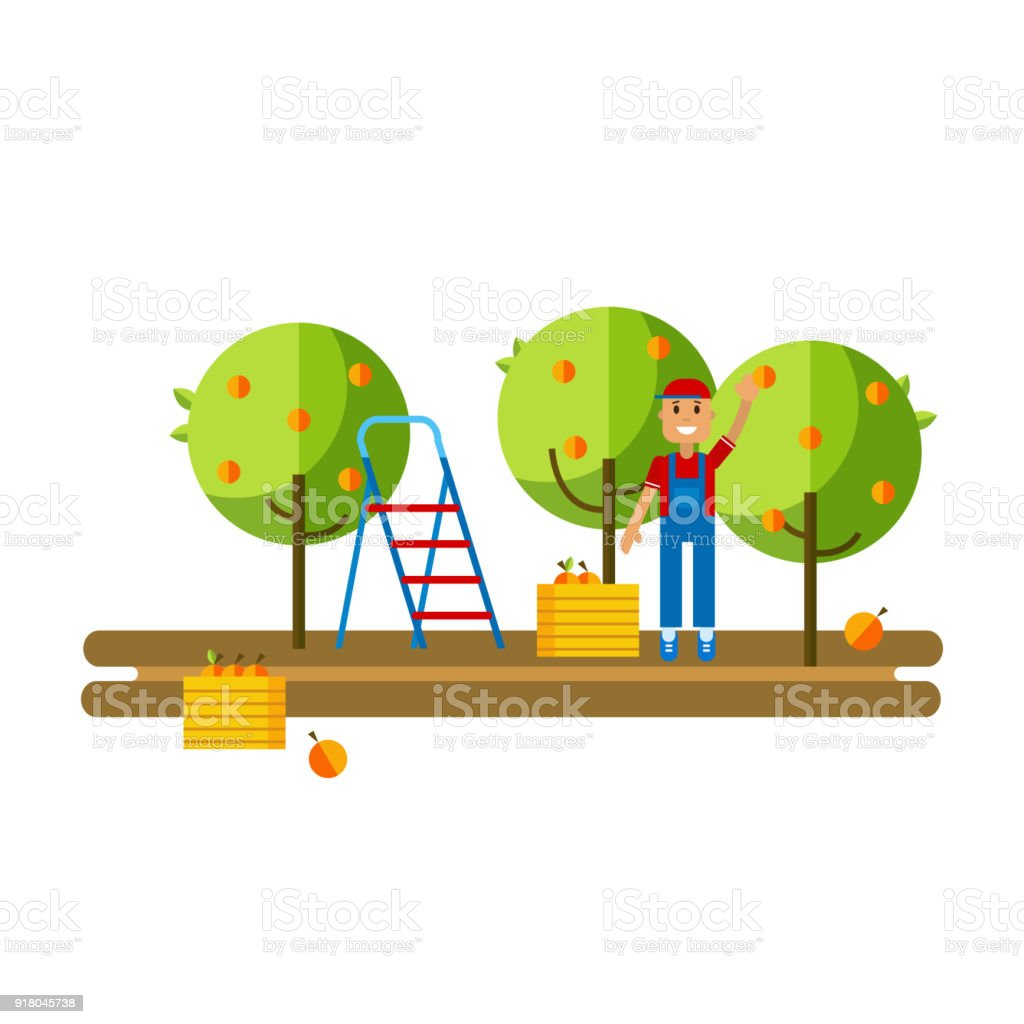 Apple orchard and harvest fruit vector art illustration