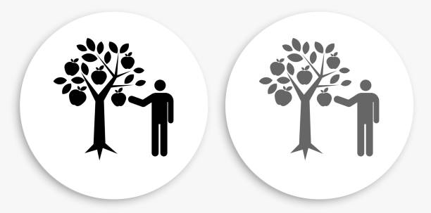 Apple Picking Black and White Round Icon Apple Picking Black and White Round Icon. This 100% royalty free vector illustration is featuring a round button with a drop shadow and the main icon is depicted in black and in grey for a roll-over effect. picking harvesting stock illustrations