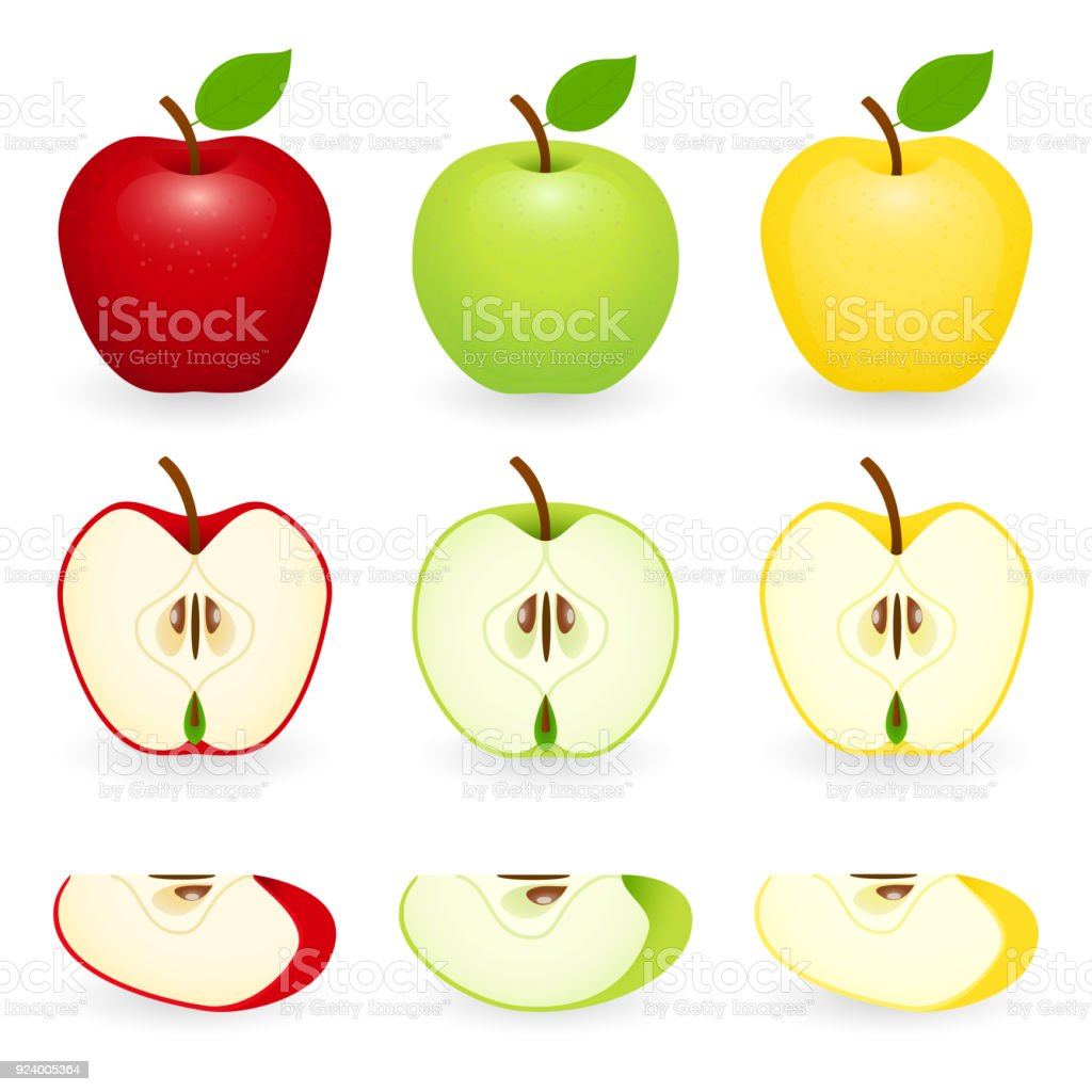 Apple slice set isolated vector art illustration