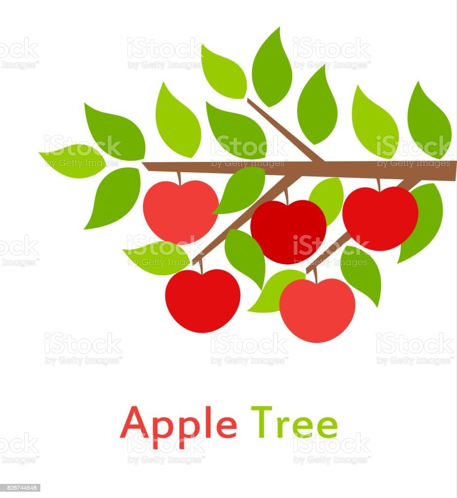 Apple tree branch vector art illustration