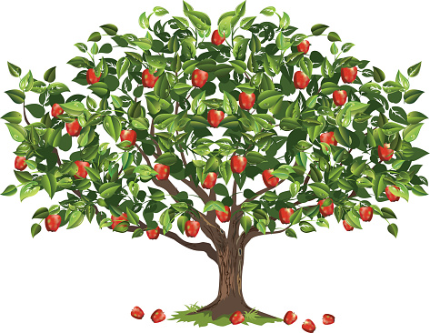 Apple Tree Filled With Ripe Fruit Ready For Harvest