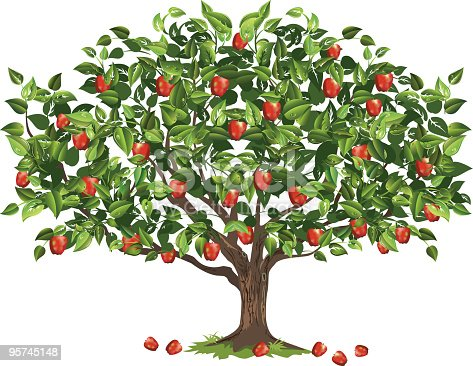 Apple tree. Apple Tree Filled With Ripe Fruit Ready For Harvest. Apple tree in full bloom filled with red apples. Apple tree with lots of red apples on the tree and some that have fallen on the ground.