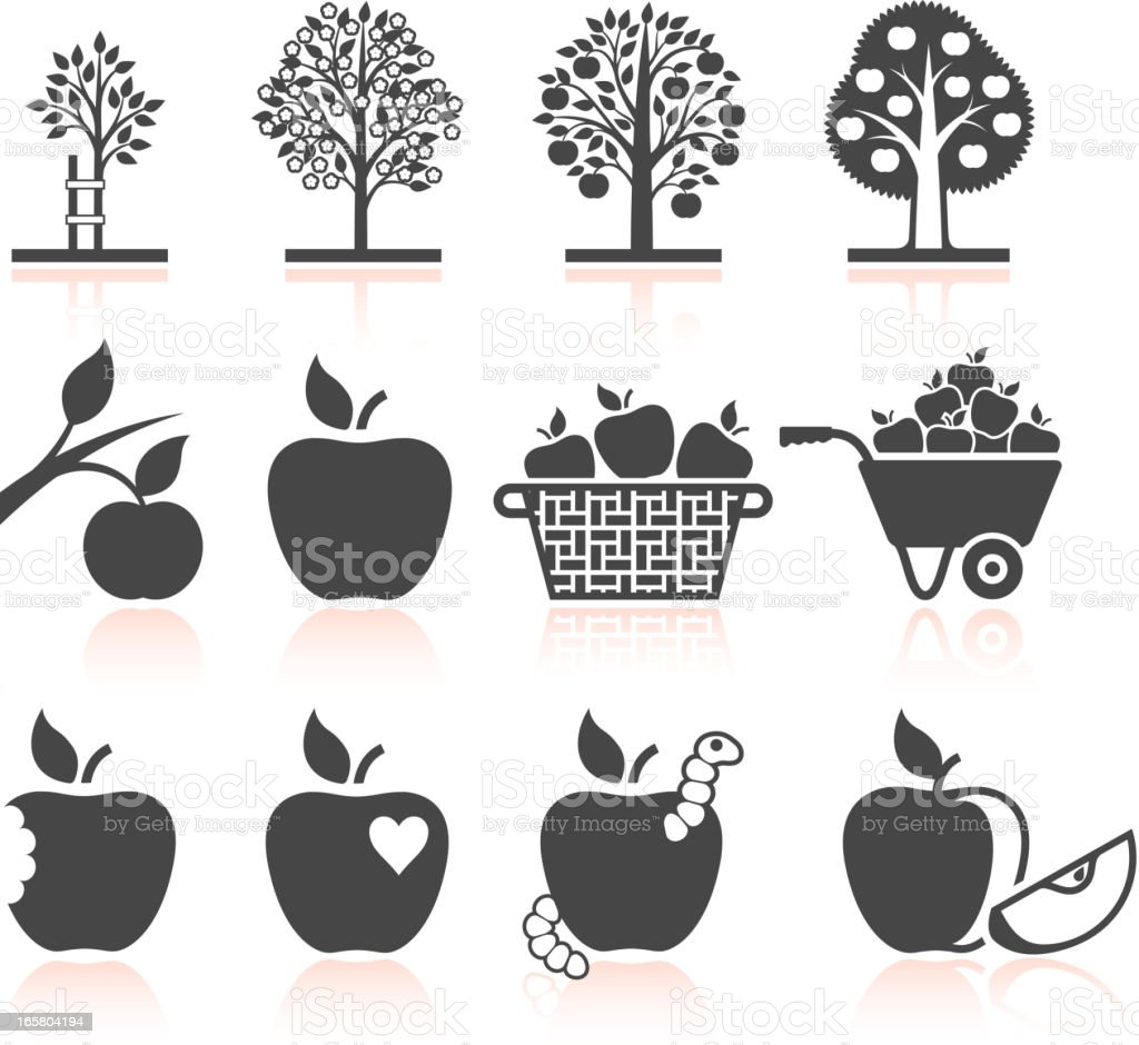 Apple Tree Growing and organic farming black & white icons vector art illustration
