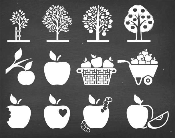 stockillustraties, clipart, cartoons en iconen met apple boom groeit en biologische landbouw vector icon set - fruitboom