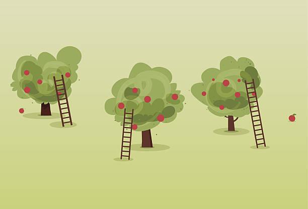 ilustrações de stock, clip art, desenhos animados e ícones de macieira colheita de - picking fruit
