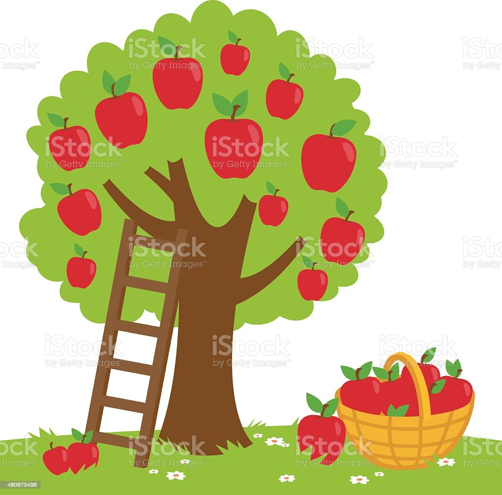 Apple tree harvesting vector art illustration