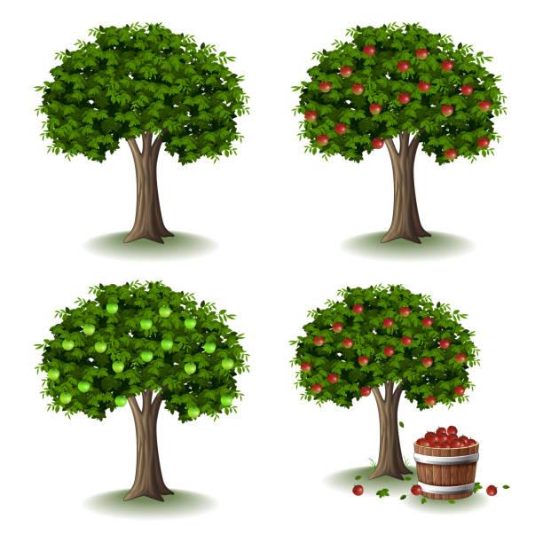stockillustraties, clipart, cartoons en iconen met apple tree illustratie collecties set - fruitboom