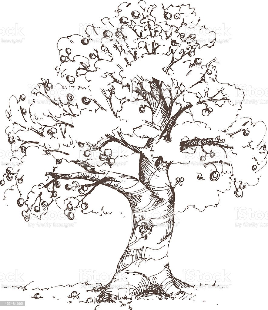 Apple Tree Sketch vector art illustration