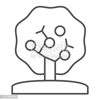 istock Apple tree thin line icon, nature concept, tree silhouette sign on white background, apple tree with apples icon in outline style for mobile concept and web design. Vector graphics. 1227634654