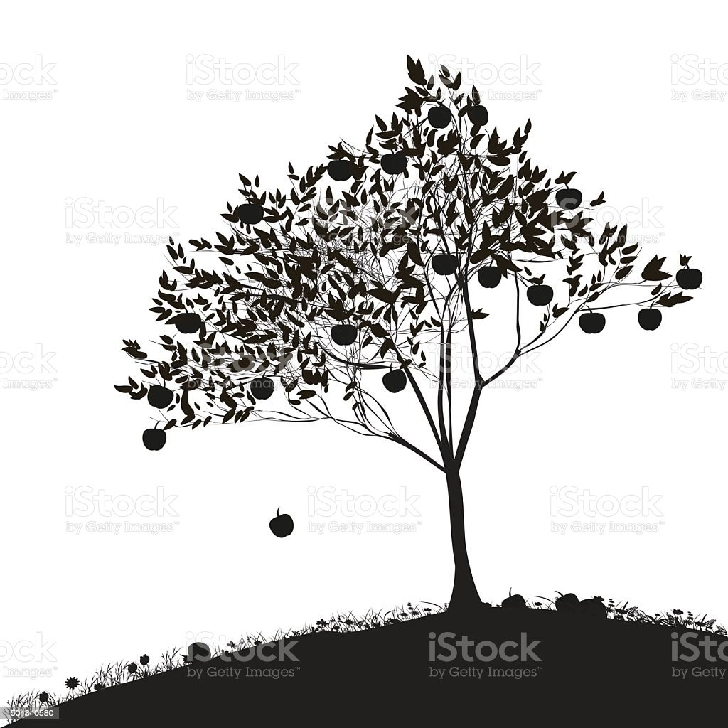 apple tree royalty free stock vector art