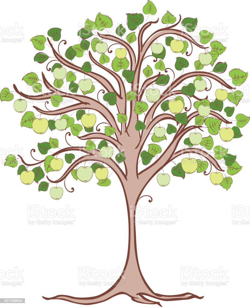 Apple tree with green apples vector art illustration