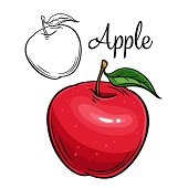 istock Apple vector drawing icon 1247361294