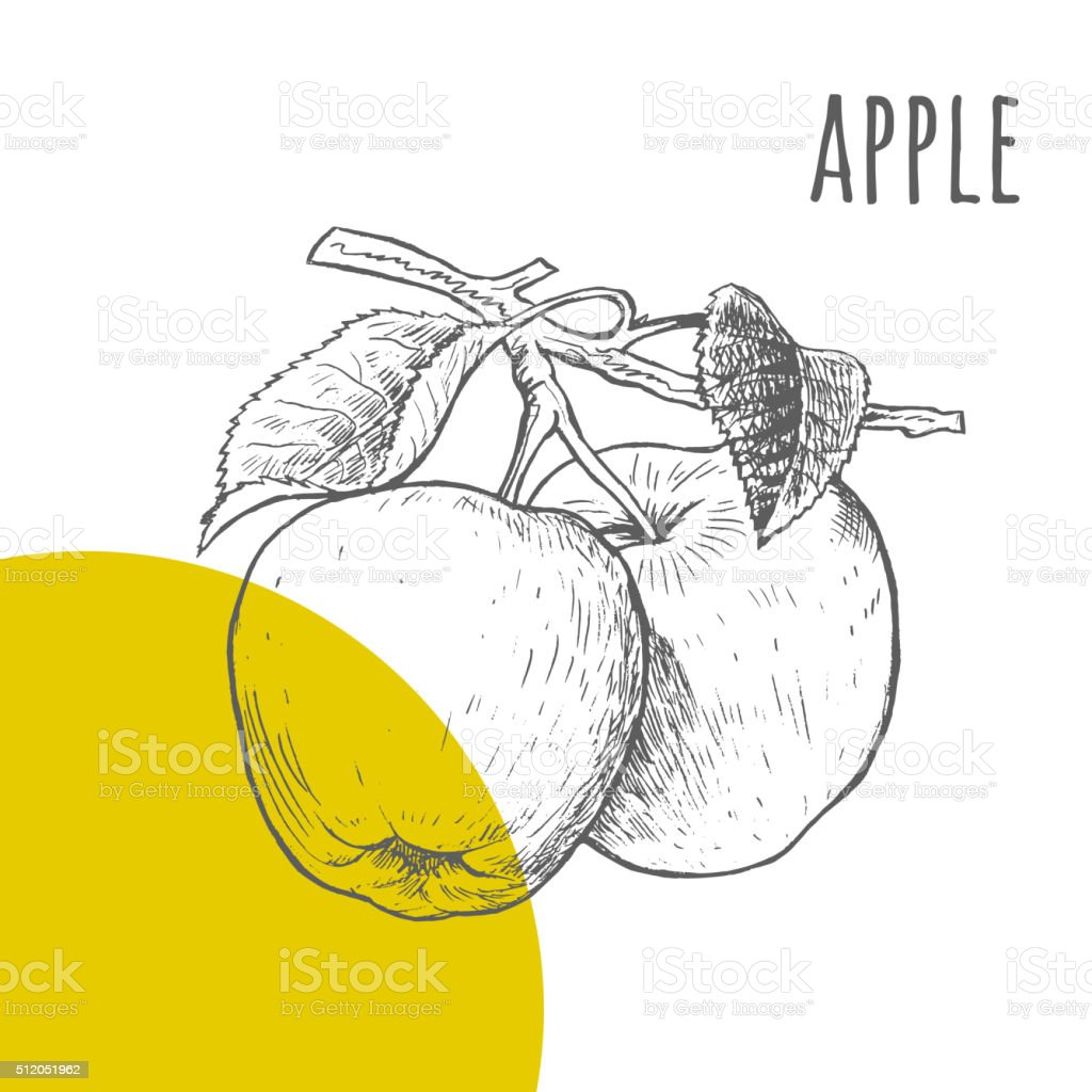 Apple dessin à main levée croquis dessin vecteur de crayon - Illustration vectorielle