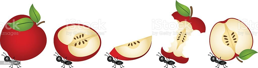 Apples being carried by ants vector art illustration