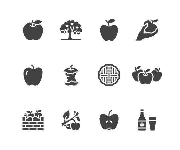 Apples flat glyph icons. Apple picking, autumn harvest festival, craft fruit cider illustrations. Signs for organic food store. Solid silhouette pixel perfect 48x48 Apples flat glyph icons. Apple picking, autumn harvest festival, craft fruit cider illustrations. Signs for organic food store. Solid silhouette pixel perfect 48x48. picking harvesting stock illustrations