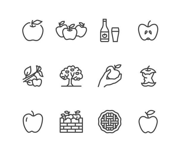 apples flat line icons. apple picking, autumn harvest festival, craft fruit cider illustrations. thin signs for organic food store. pixel perfect 48x48. editable strokes - сбор stock illustrations