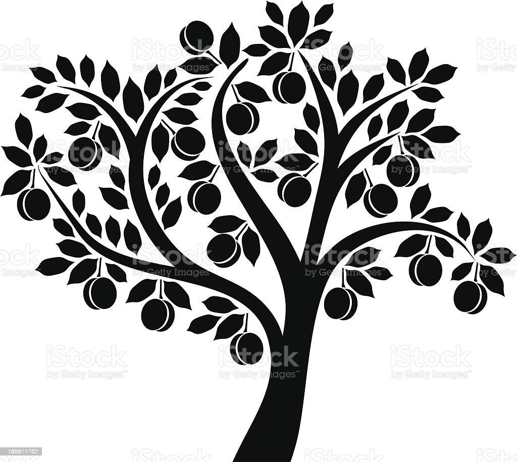 Apricot tree vector art illustration
