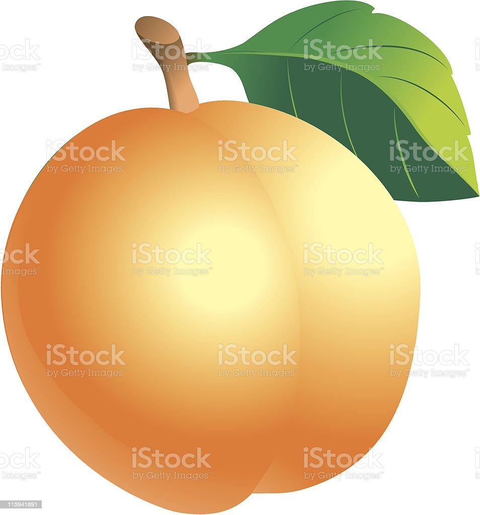 Apricot royalty-free stock vector art