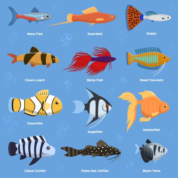 Aquarium And Ocean Fish Breeds Underwater Bowl Tropical Aquatic Animals Water Nature Pet Characters Vector Illustration Dead In Clip Art
