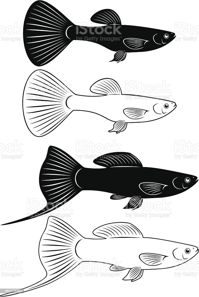 aquarium fish royalty-free stock vector art