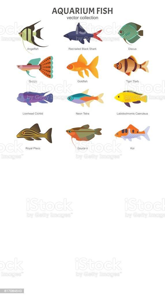 Aquarium Freshwater Fish Set Stock Vector Art More Images Of