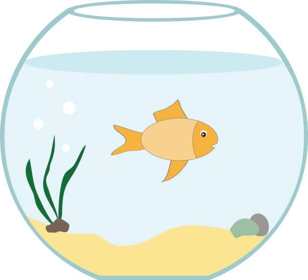 aquarium mit fischen. - fischglas stock-grafiken, -clipart, -cartoons und -symbole