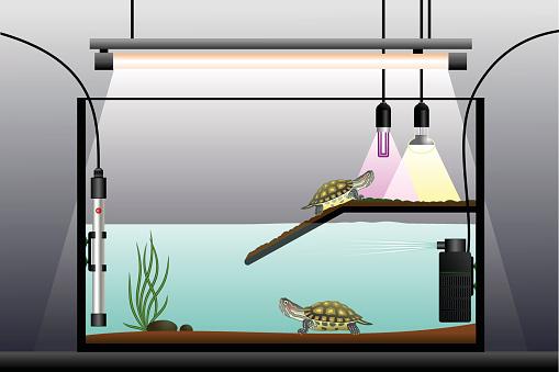 Aquaterrarium Stock Illustration - Download Image Now