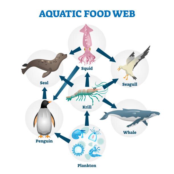 Aquatic food web vector illustration. Labeled educational water life scheme vector art illustration