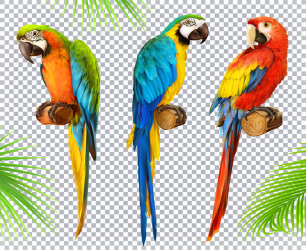 ara papagei. ara. foto realistische 3d vektor icon set - maul stock-grafiken, -clipart, -cartoons und -symbole