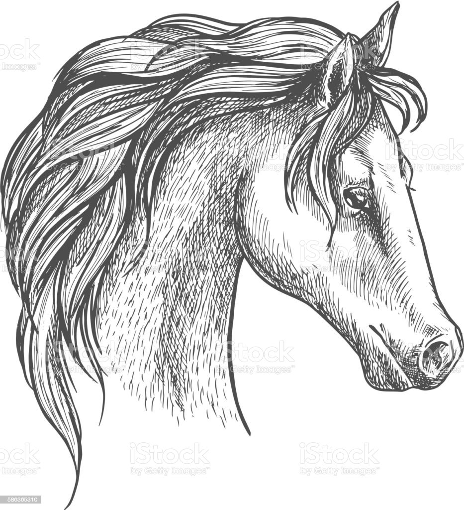 Arabian Horse Head Sketch For Equestrian Design Stock Illustration Download Image Now Istock