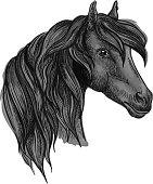 Arabian horse head sketch for equine sport design